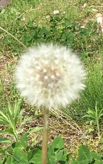 植物の写真・画像素材[2145430]