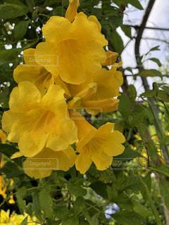花,黄色,沖縄,宮古島,イエロー,色
