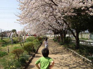風景,空,花,春,桜,屋外,後ろ姿,花びら,子供,人物,地面,フォトジェニック,色・表現,感覚・感情