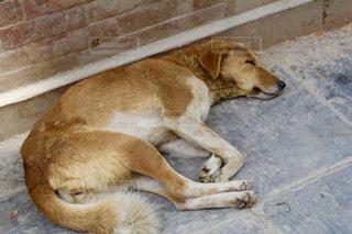 犬,海外,暑い,旅行,旅,歩道,お昼寝,一人旅,ネパール,バックパッカー,夏バテ