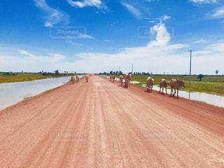 未舗装の道路の写真・画像素材[1356546]