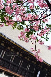 京都 三十三間堂の写真・画像素材[1676160]
