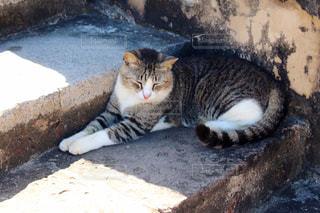 階段でひなたぼっこする猫の写真・画像素材[2148185]