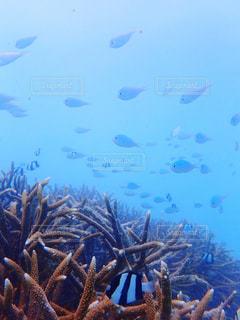 美しい海中の眺めの写真・画像素材[2376845]