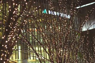 風景,冬,夜,屋外,樹木,イルミネーション,ライトアップ,明るい,グランフロント,草木,シャンパンゴールド