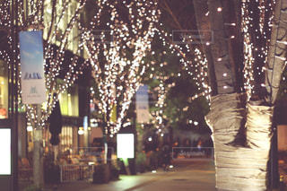 冬,夜,屋外,光,樹木,イルミネーション,明るい,グランフロント,シャンパンゴールド