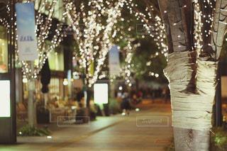 冬,夜,屋外,光,樹木,イルミネーション,ライトアップ,明るい,玉ボケ,グランフロント,シャンパンゴールド