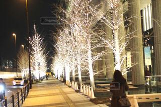 女性,1人,冬,屋外,樹木,イルミネーション,人物,ライトアップ,明るい,通り,グランフロント大阪,シャンパンゴールド