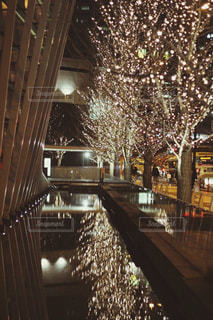 樹木,イルミネーション,ライトアップ,風,明るい,グランフロント大阪,おでかけスポット,シャンパンゴールド