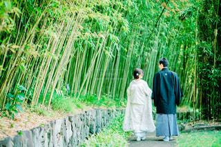 和服を着た夫婦の後ろ姿の写真・画像素材[3139855]