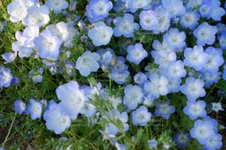 近くの花のアップの写真・画像素材[1367896]