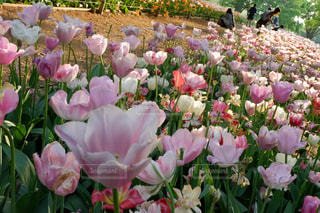 近くにピンクの花の束のアップの写真・画像素材[1367925]