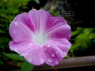 自然,花,夏,水,日中,夏バテ,熱中症,熱中症対策