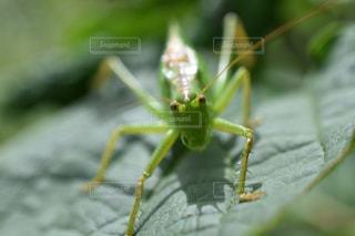 昆虫,フィルム,草木,フィルム写真,フィルムフォト
