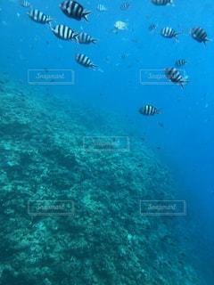 水中写真の写真・画像素材[1340307]