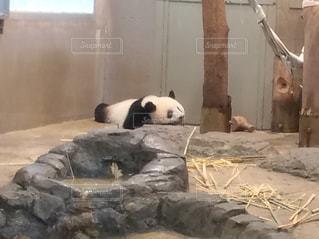 上野動物園,夏バテ,熱中症,シャンシャン,平成最後の夏