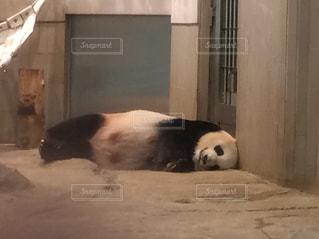 上野動物園,夏バテ,熱中症,平成最後の夏,グダ〜