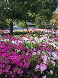 花,屋外,ピンク