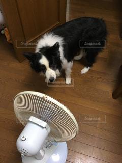 夏,屋内,扇風機,猛暑,熱中症対策