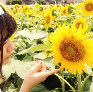 ひまわりに見とれる女の子の写真・画像素材[1367863]