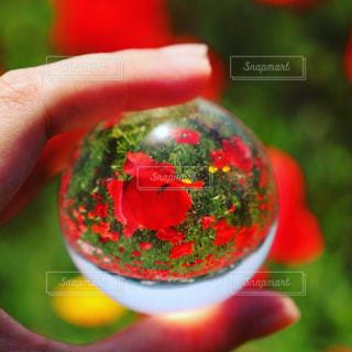 水晶にうつしたポピー畑の写真・画像素材[1414203]