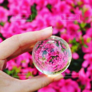 花,ピンク,水晶,pink,つつじ,フォトジェニック