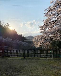 風景,空,春,桜,屋外,草,樹木,夕陽,草木,日中,クラウド