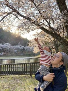 風景,公園,桜,屋外,草,樹木,お花見,人,赤ちゃん,幼児,夕陽