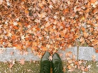 秋がきたの写真・画像素材[2567177]