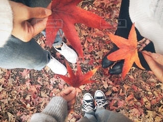 秋の訪れの写真・画像素材[2567213]