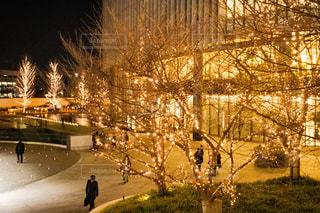 冬,夜,屋外,樹木,イルミネーション,明るい,グランフロント大阪,シャンパンゴールド