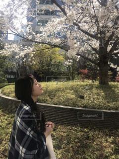 女性,自然,花,春,桜,東京,花見,お花見,お天気,まだ寒い