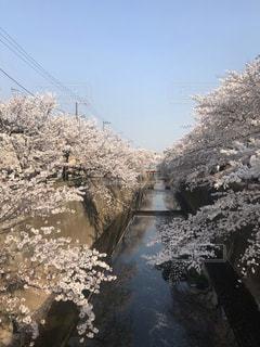 自然,花,春,桜,花見,お花見,板橋区,お天気,中板橋,まだ寒い