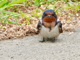 動物,鳥,屋外,草,地面