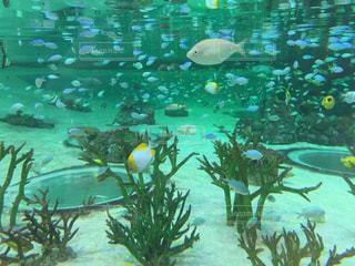 水色のお魚たちの写真・画像素材[1367793]