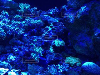 海の底の写真・画像素材[1347411]