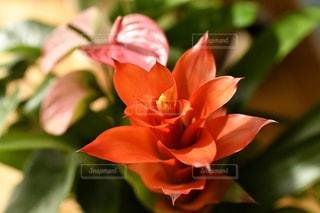 近くの花のアップの写真・画像素材[1546149]