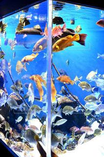 水族館の写真・画像素材[1580076]