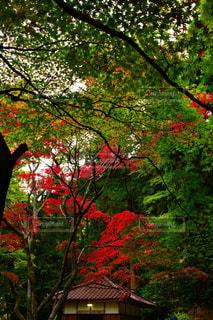 紅葉の聖宝寺の写真・画像素材[1628508]