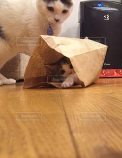 紙袋の中で遊ぶ子猫の写真・画像素材[1635912]