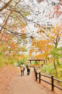 散歩の写真・画像素材[1653501]