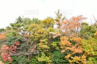 森の写真・画像素材[1654085]