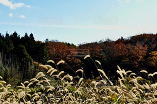 自然,風景,空,屋外,白,雲,青,草,樹木,草木