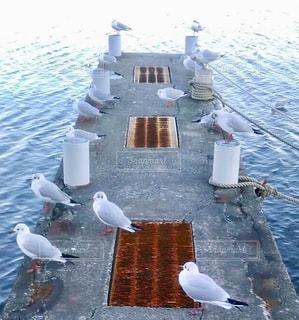 冬,屋外,白,水面,カモメ,船着場