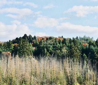 自然,空,屋外,緑,白,雲,青,景色,草,樹木