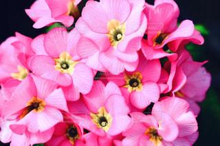 近くの花のアップの写真・画像素材[1794535]