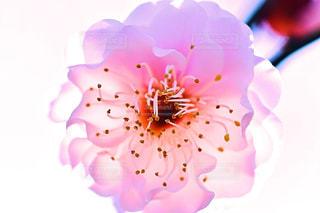 近くの花のアップの写真・画像素材[1799755]
