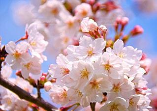 近くの花のアップの写真・画像素材[1799769]