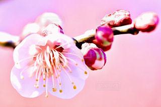 近くの花のアップの写真・画像素材[1800113]