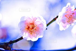 近くの花のアップの写真・画像素材[1804447]